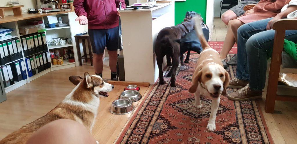 Hundeschule Hundetrainer Welpen